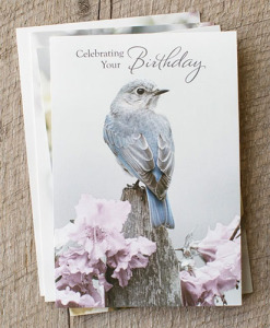 Birthday | A Touch of Color | 12 Boxed Cards