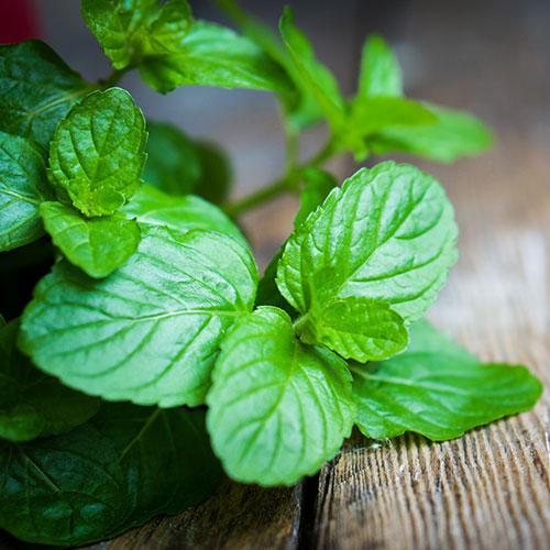 Peppermint All-Natural Odor Eliminator Essential Oil - 15ml