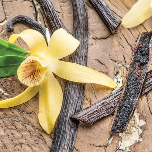 Vanilla Bean 2.5 oz Odor Eliminating Melts